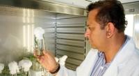 Las plantas del agave pronto podrían tener impulso para su crecimiento de manera natural, y es que investigadores de tres universidades del Mundo, entre ellas la Universidad Autónoma de Guadalajara […]