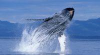En el marco del Día Mundial de las Ballenas y los Delfines a celebrarse este 23 de julio,Junghanns, empresa líder en Agua de Mesa, en alianza con la asociaciónEcología y […]