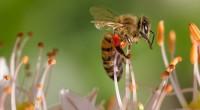 Colaborador invitado: Sergio Roldan Earthgonomic (@earthgonomic) Las abejas son pequeños insectos trabajadores que no suelen ser del agrado de muchos, de hecho existe un miedo moderado general en la sociedad […]