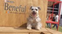 En días pasados y con el fin de ayudar a los perritos menos afortunados, BENEFUL y reconocidos diseñadores mexicanos se unieron para apoyar a la Fundación Domingo en 4 patas. […]
