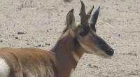 Se dio a conocer que en la península de Baja California, la Comisión Nacional de Áreas Naturales Protegidas (CONANP), a través de las direcciones del APFF Valle de los Cirios […]