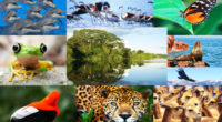La actual crisis global de pérdida de especies obliga a un cambio de paradigma en las políticas internacionales sobre biodiversidad. Hoy 25 de noviembre dio inicio la reunión número 23 […]