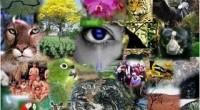 La institucionalización de las políticas públicas en los estados del país, en materia de biodiversidad, fortalece sus capacidades locales para conservar y usar sustentablemente el capital natural. Por ello, el […]