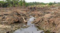 De acuerdo a un escrito de Nele Marien, Co-coordinadora del Programa de Bosques y Biodiversidad de Amigos de la Tierra Internacional, la COP13 surge en respuesta a una crisis compleja […]