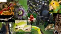 """Se hizo el anuncio oficial del IV Congreso Internacional de Recursos Naturales """"Cirenat 2016"""", a desarrollarse del 4 al 8 de abril venideros en Puerto Vallarta, Jalisco; evento en el […]"""