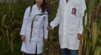 Después de varios años de investigaciones, el científico del Instituto Politécnico Nacional (IPN), Miguel Ángel Villalobos López, desarrolló biofertilizantes que, a diferencia de los productos comerciales, actúan en suelos áridos […]
