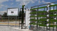 Un equipo de investigación de la Unidad Cuajimalpa de la Universidad Autónoma Metropolitana (UAM), ubicada al poniente de la Ciudad de México (CDMX), creó un biorreactor de microalgas para la […]