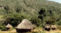 De acuerdo a un estudio de sostenibilidad los niños que viven en zonas de África que cuentan con una cobertura forestal densa tienden a tener dietas más nutritivas. Este hecho […]