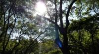 Los logros alcanzados en la protección forestal de la cuenca Amanalco-Valle de Bravo, Estado de México, es el camino a seguir en el desarrollo y aprovechamiento sustentable de los bosques […]