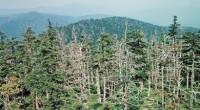 Además la lluvia ácida degrada los suelos, lo cual afecta las raíces y la nutrición de las plantas. Los bosques son de los ecosistemas en los que más se han […]