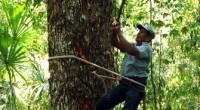 De acuerdo a diversas organizaciones civiles y líderes de comunidades y organizaciones forestales de Oaxaca, Michoacán, Chihuahua, Guerrero, Veracruz y Quintana Roo, cada vez es más complicado obtener permisos y […]