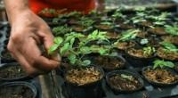De acuerdo al Consejo Civil Mexicano de Silvicultura Sustentable (CCMSS), en los últimos años, México ha recibido más de 400 millones de dólares (MDD) del Fondo para el Medio Ambiente […]