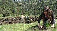 """En las reforestaciones que se realizan en la Ciudad de México (CDMX), ante la veda histórica de """"no aprovechamiento forestal masivo"""", conlleva a que las reforestaciones que se realizan en […]"""