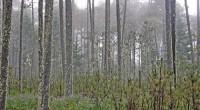 Metepec, Méx.- El Estado de México se ubica a la vanguardia en materia forestal, debido a que el gobernador de la entidad, Enrique Peña Nieto, durante su sexenio ha trabajado […]