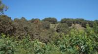 México es catalogado como un precursor de programas de conservación forestal, como es el caso de Proarbol, que cubre más de 3.5 millones de hectáreas en la protección del arbolado […]
