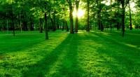 Con el propósito de conservar y restaurar los ecosistemas forestales, frenar su degradación e impulsar la competitividad del sector forestal, Heineken México y la Comisión Nacional Forestal (CONAFOR) firmaron hoy […]