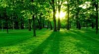 Ante los avances nacionales en protección forestal y uso sustentable de este sector, hacen de México un referente para llegar a un mecanismo de Reducción de Emisiones por Deforestación y […]