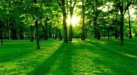 Yucatán, Méx.- (INS). Con el fin de realizar un mapeo preciso de los bosques para fomentar su manejo sustentable en el país, la Alianza México REDD+ dio a conocer la […]
