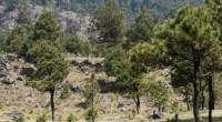 Las plagas y enfermedades forestales representan un riesgo para los ecosistemas y, por lo tanto, para los medios de vida de las personas que los habitan y dependen de […]