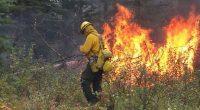 El primer contingente de 100 combatientes mexicanos de incendios forestales y 4 técnicos especializados regresó a México la noche de este lunes. Este grupo es uno de los cinco contingentes […]