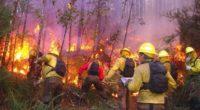 La Secretaría de Medio Ambiente y Recursos Naturales y la Comisión Nacional Forestal (Conafor) informan la situación de los incendios forestales en el país al 21 de mayo con corte […]