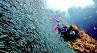 Como parte de las acciones para proteger la integridad de los recursos naturales en Áreas Naturales Protegidas (ANP) del Golfo de California y el Pacifico Mexicano, la integrante del Instituto […]