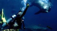 Uno de los sitios ideales para bucear en México, se encuentra en La Paz, Baja California Sur, uno de los entornos marinos más singulares del mundo, el cual es considerado […]
