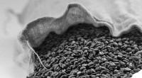Por: José Manuel López Castro,Luis E. Velasco Yépez CAMPO Y DESARROLLO (47) México produce más de 6 millones desacos de café. Cada saco es de 60kilogramos, hecho que lo ubica […]