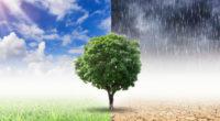 La Tierra se encuentra en un punto de inflexión en su historia; un informe de las Naciones Unidas asegura que, tras el confinamiento mundial, las concentraciones de gases de efecto […]