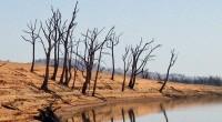 Una gran mayoría de los ciudadanos del mundo —casi el 80 por ciento— se muestran muy preocupados por los impactos del Cambio Climático (CC), mientras que dos de cada tres […]