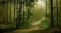 Representantes de organizaciones forestales, se reunieron con el director general de Gestión Forestal y de Suelos de la Secretaría de Medio Ambiente y Recursos Naturales (Semarnat), para exponer la urgencia […]