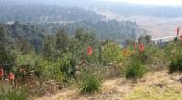 De acuerdo al Consejo Civil Mexicano de Silvicultura Sustentable (CCMSS), entre algunas recomendaciones que conviene seguir en el sector forestal en el Programa Especial de Cambio Climático (PECC) 2013-2018 que […]