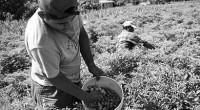 Ricardo Chávez, Colaborador invitado En memoria del profesor Ramón Danzós Palomino (Líder campesino) En el décimo aniversario de su fallecimiento. El sector agrario en México ha sido portador de una […]