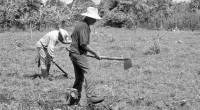 El campo mexicano no sólo envejece, sino que también enfrenta serios problemas de sequía y mercado que lo mantienen estancado y, con él, el desarrollo nacional. El diagnóstico anterior fue […]