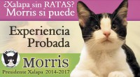 """* Publica El Universal (junio 11 de 2013): """"La clase política veracruzana y autoridades electorales comenzaron a manifestar preocupación por el crecimiento del 'Candigato Morris' """", postulado por ciudadanos a […]"""