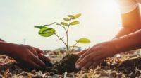 Desde 1872, cada año en Estados Unidos conmemora lo importante y necesario que son los árboles para el planeta. Esta celebración es el último viernes de abril. Cuando la gente […]
