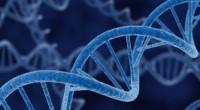 Entender cómo los sistemas de comunicación entre las células (los canales intercelulares o sinapsis eléctricas) regulan el proceso de secreción de hormonas, en particular de la insulina, podría dar pistas […]