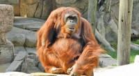 El Zoológico de León, Guanajuato, es uno de los más importantes del país que trabaja a favor de especies amenazadas, por lo que llevará a cabo del 13 al 15 […]