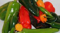 Los chiles (un alimento tradicional desde épocas prehispánicas en México) son un ingrediente esencial de la comida tradicional, y sus extractos pueden ser utilizados para inhibir la actividad de algunas […]