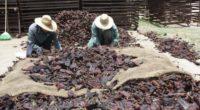 Los pimientos y chiles mexicanos se encuentran en el primero y tercer lugar en el ranking mundial de exportaciones, respectivamente, lo que los coloca en la categoría de cultivos estratégicos […]