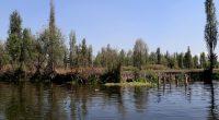 Las chinampas o jardines flotantes son uno de los bienes culturales más importantes de México por tener mil años de antigüedad, ser un ejemplo relevante de paisaje cultural y contar […]
