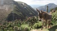 La productora Natura Group se encuentra en San Luis Potosí rodando dos cineminutos para Canal 22 y Estudios Churubusco con la finalidad de iniciar una serie de 52 cápsulas en […]
