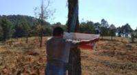 La Procuraduría Federal de Protección al Ambiente (PROFEPA)clausuró y suspendió de manera total temporal actividades de aprovechamiento de plantación forestal comercial, al carecer de autorización que acreditara la legal procedencia […]