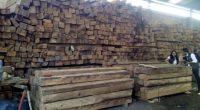 La Procuraduría Federal de Protección al Ambiente (PROFEPA) aseguró 275 metros cúbicos de madera en un aserradero clandestino en el municipio de Ecatepec, Estado de México, misma que se presume […]