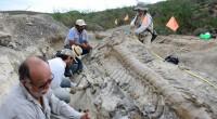 Tras el descubrimiento de una cola de dinosaurio de más de 70 millones de años de antigüedad, en el desierto de Coahuila, al norte de México, ubicada dentro del Ejido […]