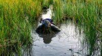 Se dio a conocer que quince Guardaparques de la Comisión Nacional de Áreas Naturales Protegidas (CONANP), fueron capacitados y certificados para poder replicar e incrementar el compromiso institucional al frente […]