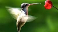 En la presentación del libro Colibríes de México y Norteamérica, se documentó que en el continente americano está habitada por 330 especies de colibríes, este libro busca ser una guía […]