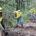 Brigadas de tres estados del país resultaron ganadoras en la convocatoria 2018 del Reconocimiento de Brigadas de Combatientes de Incendios Forestales y Técnicos Especializados en el Manejo del Fuego, que […]