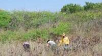 La Comisión Nacional de Áreas Naturales Protegidas (CONANP), a través de la Reserva de la Biosfera la Encrucijada dio a conocer que se mantienen los trabajos de conservación de uno […]