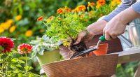La creación de pequeños jardines dentro de los espacios reducidos que ofrece la ciudad va en aumento. Esta idea nace de querer revivir las áreas verdes urbanos y tener alternativas […]